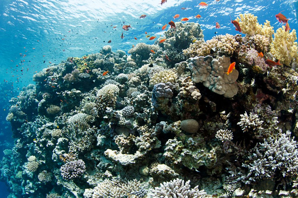 Scuba diving in Egypt / Red Sea is just great!